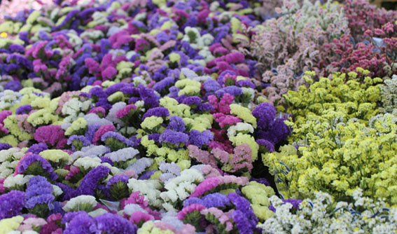giorgetti fiori2